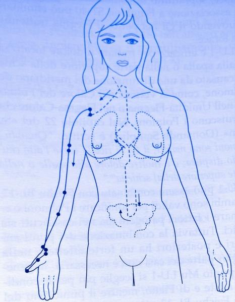 Disegno di corpo umano femminile con meridiano del polmone